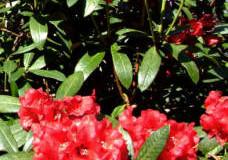 Jaké rostliny do předzahrádky