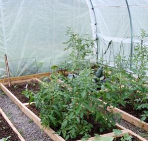 Pěstování ve fóliovníku, skleníku a pařeništi