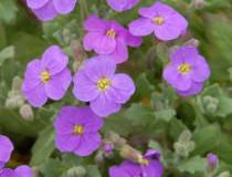 Jarní květiny ve skalce