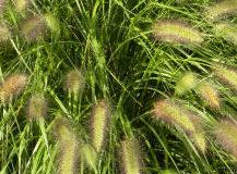 Okrasné trávy v květináčích a nádobách