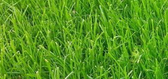 Jak odstranit mech v trávníku?