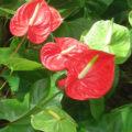 Prokořenění květináče