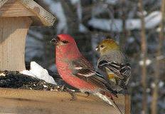 Kteří ptáci bydlí na zahradě