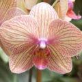 Orchideje, pěstování