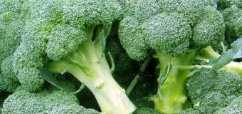 Recepty na vaření z brokolice