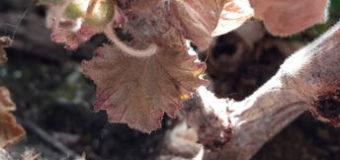 Škůdci okrasných rostlin – 3