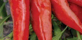 Koření v kuchyni – paprika