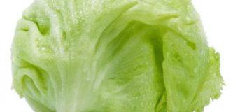 Pěstování ledového salátu
