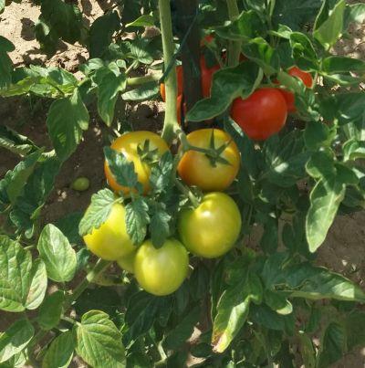 Využití malé zahradní plochy pro pěstování